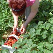 Prace sezonowe zazwyczaj zmniejszały stopę bezrobocia w lipcu